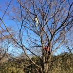 マスタングが木の上に!